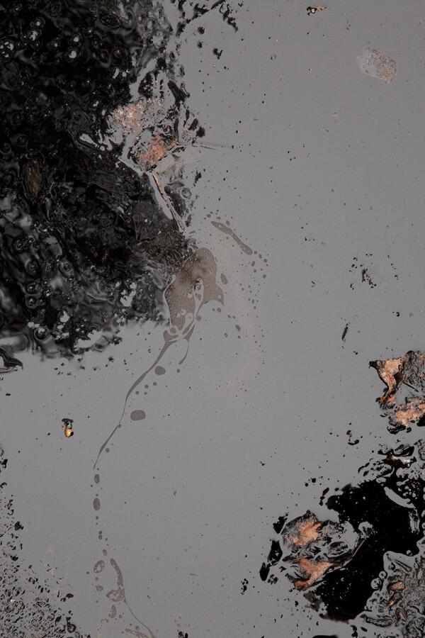 Wondelgemse Meersen. Archiv, 2012/15<br /> archival pigment print, 121,95 x 81,3 cm
